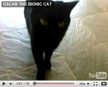 Oscar Bionic Cat
